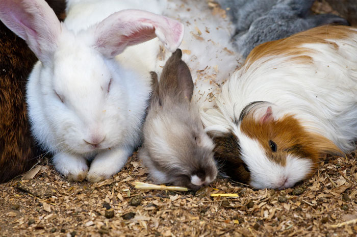 Pet Smile Month- Don't forget the rabbits and rodents!