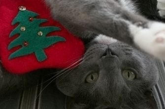 Pets overindulging at Christmas