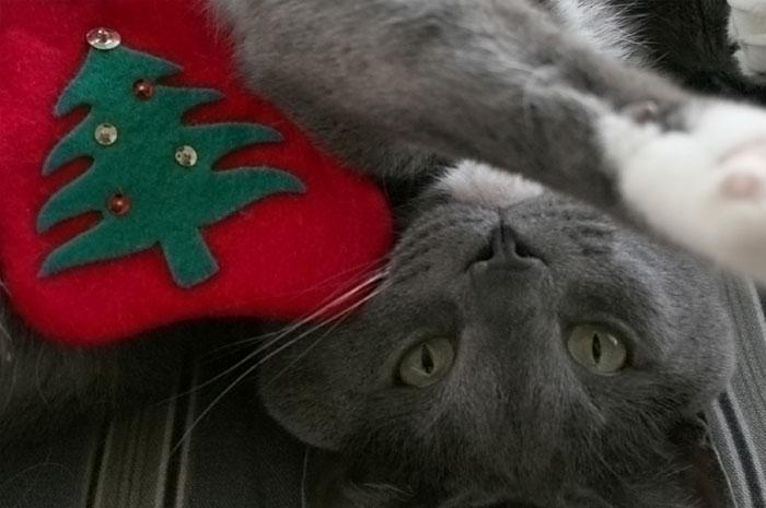 Pets overindulging at Christmas